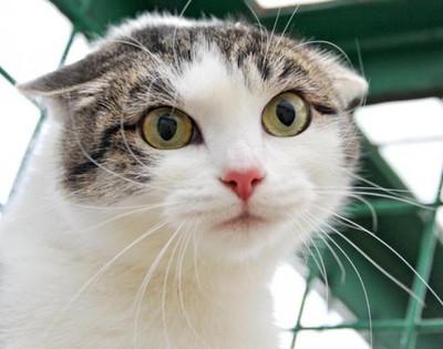 Помощь кошкам приюта
